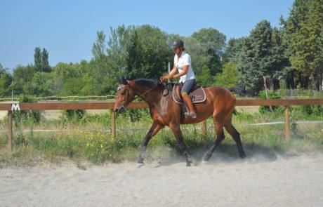 Équitation d'ensemble - Écoles des aides - Isabelle Peynet
