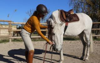 Équitation d'ensemble - École des aides - Isabelle Peynet