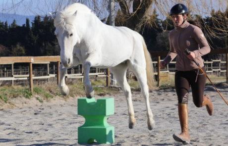 Équitation d'ensemble - Équitation éthologique