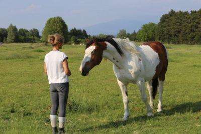 Équitation d'ensemble – Isabelle Peynet