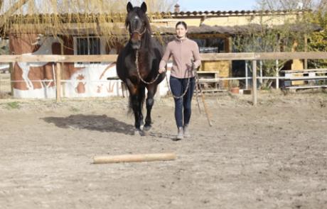 Équitation d'ensemble – Équitation éthologique