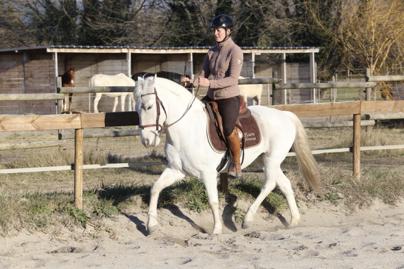 Équitation d'ensemble – École des aides